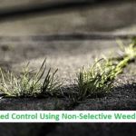 Weed Control Using Non-Selective Weedkiller
