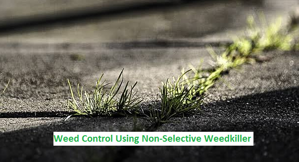 weed control and killer